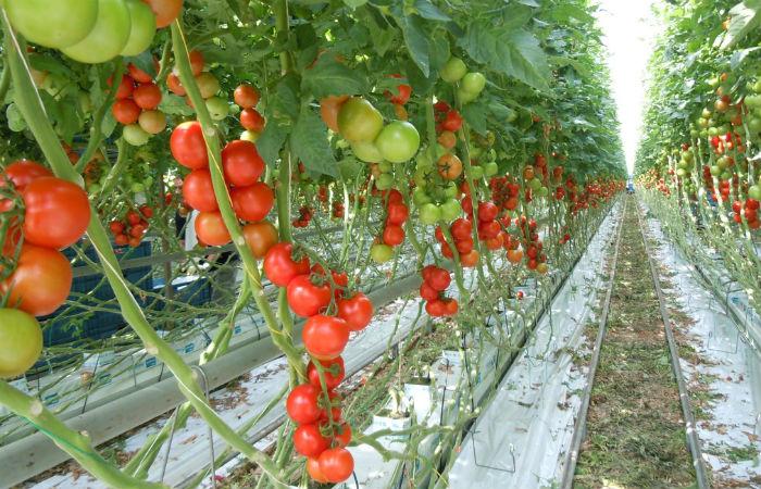 Выращивание овощей в зимнее время 50