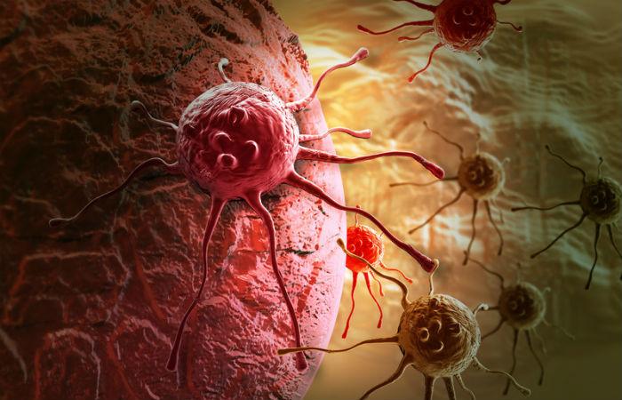 Ученые поведали опричинах распространения заразного рака